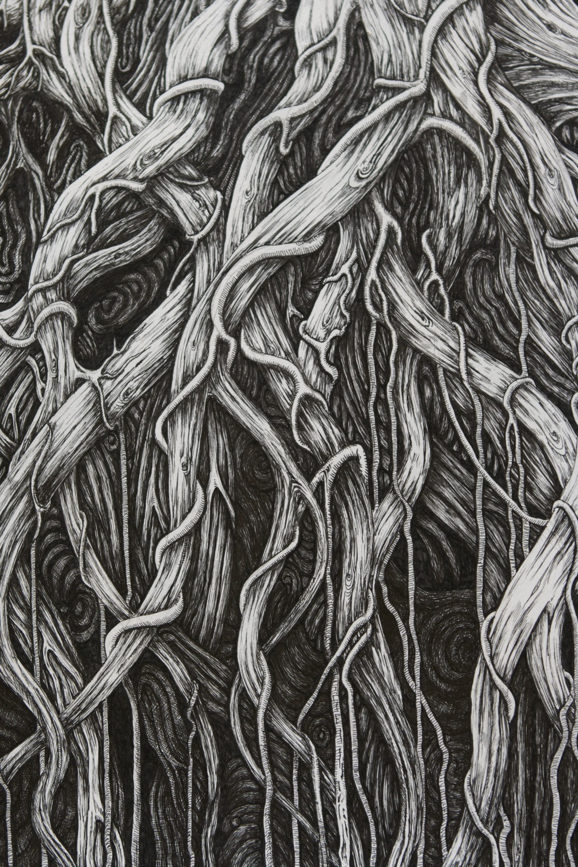 Tree Roots Underground Drawing | www.imgkid.com - The ...